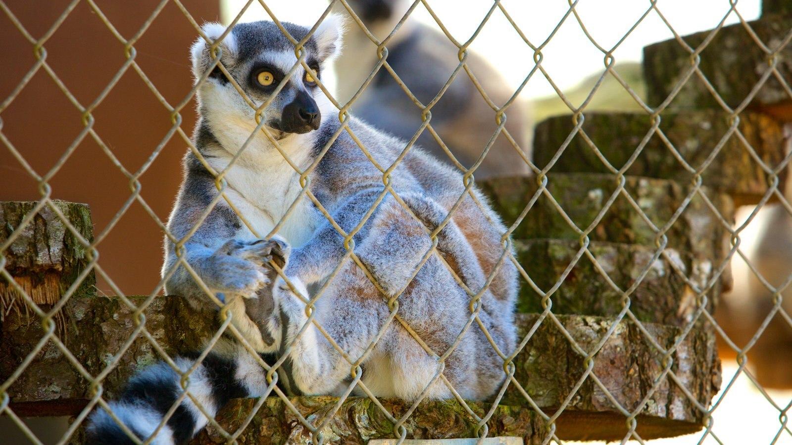 West Coast Game Park Safari caracterizando animais de zoológico e animais fofos ou amigáveis