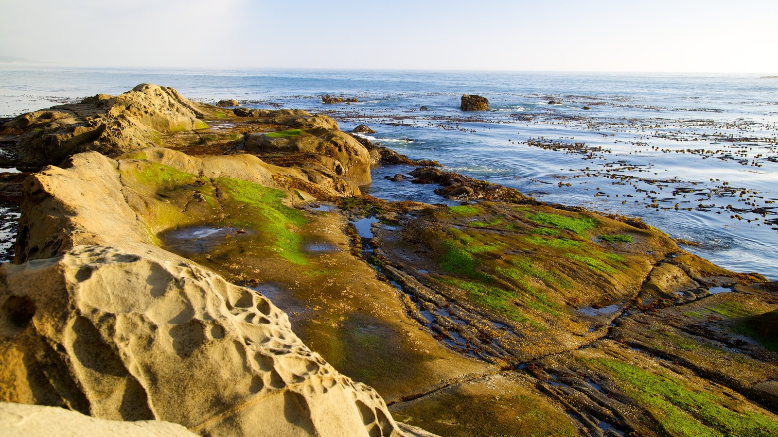 Parque estatal Cape Arago que incluye vistas generales de la costa