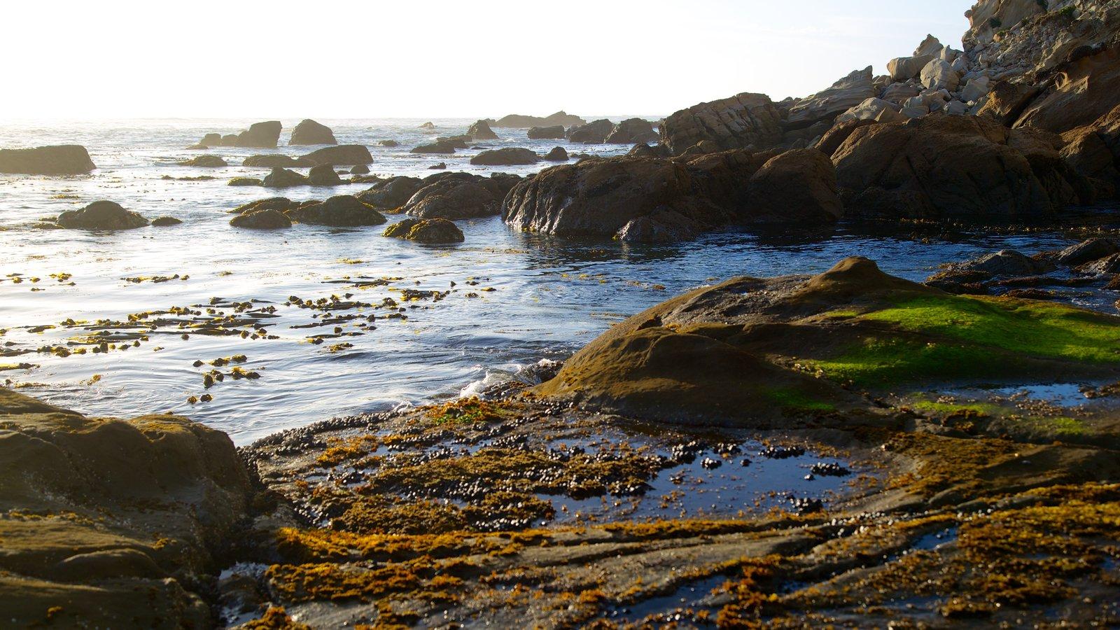 Parque estatal Cape Arago mostrando costa rocosa