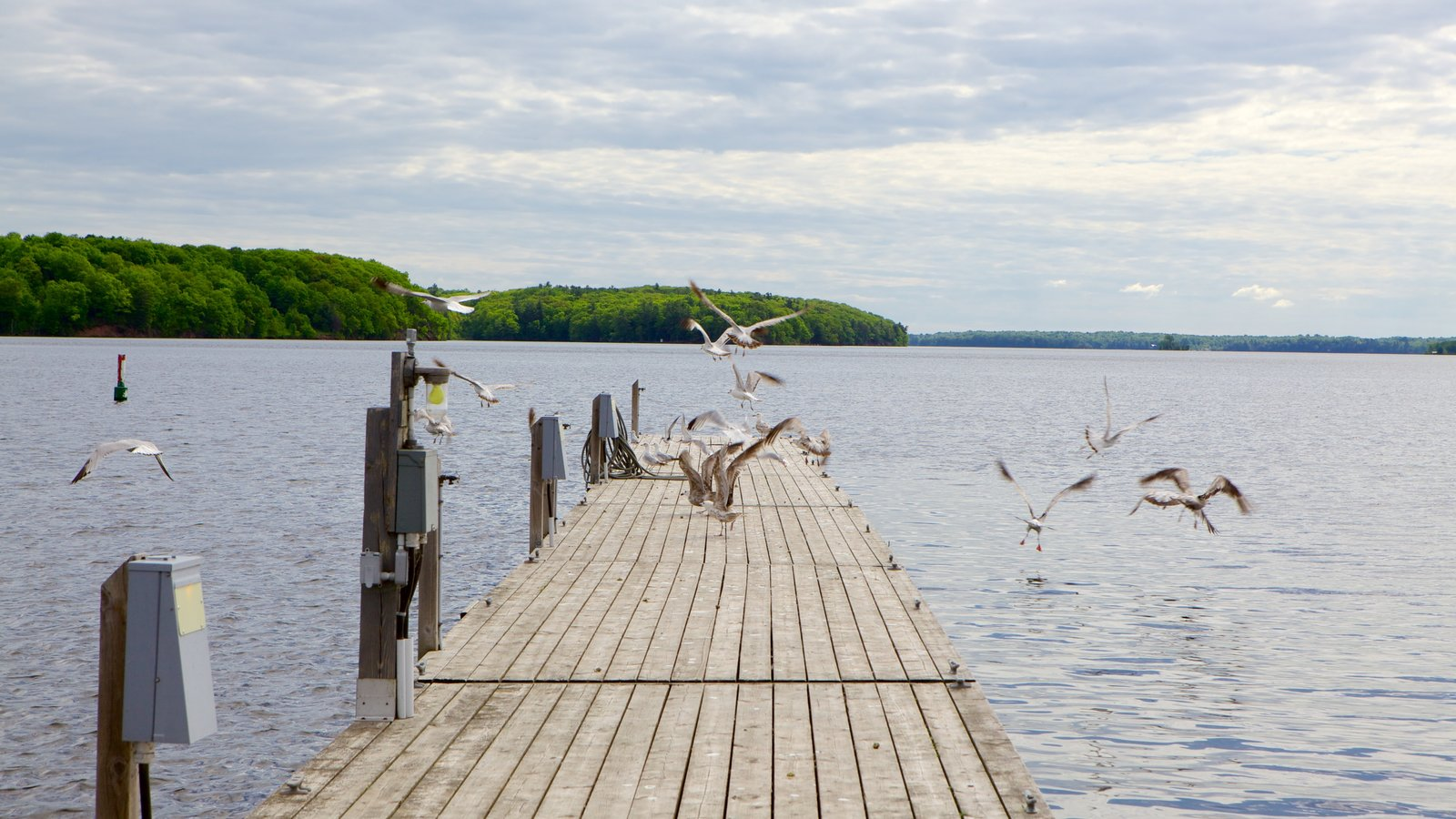 Westport caracterizando vida das aves