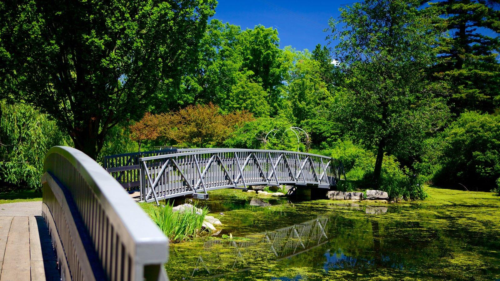 St. Thomas mostrando un puente y un estanque