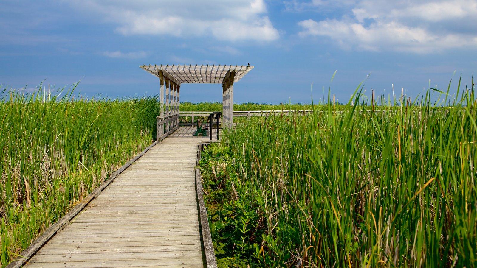 Point Pelee National Park ofreciendo humedales y un puente