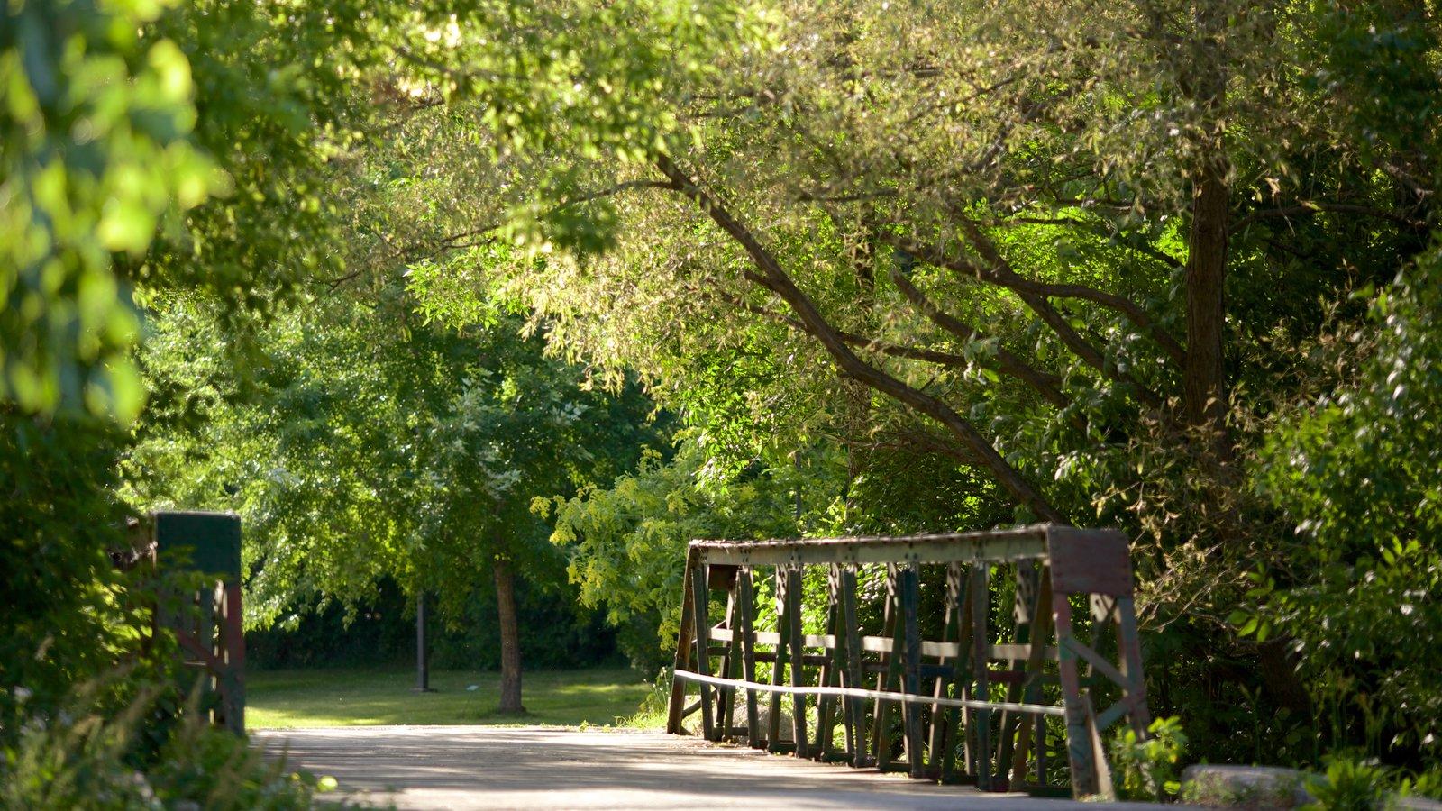 Collingwood que incluye un parque y un puente