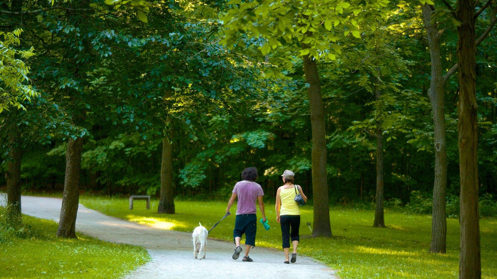 Barrie Arboretum em Sunnidale Park mostrando escalada ou caminhada e um jardim assim como um casal