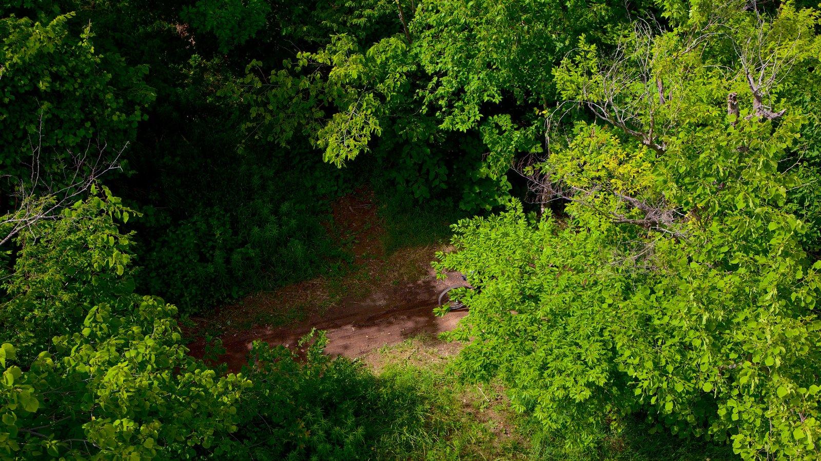 Blue Mountains caracterizando cenas de floresta