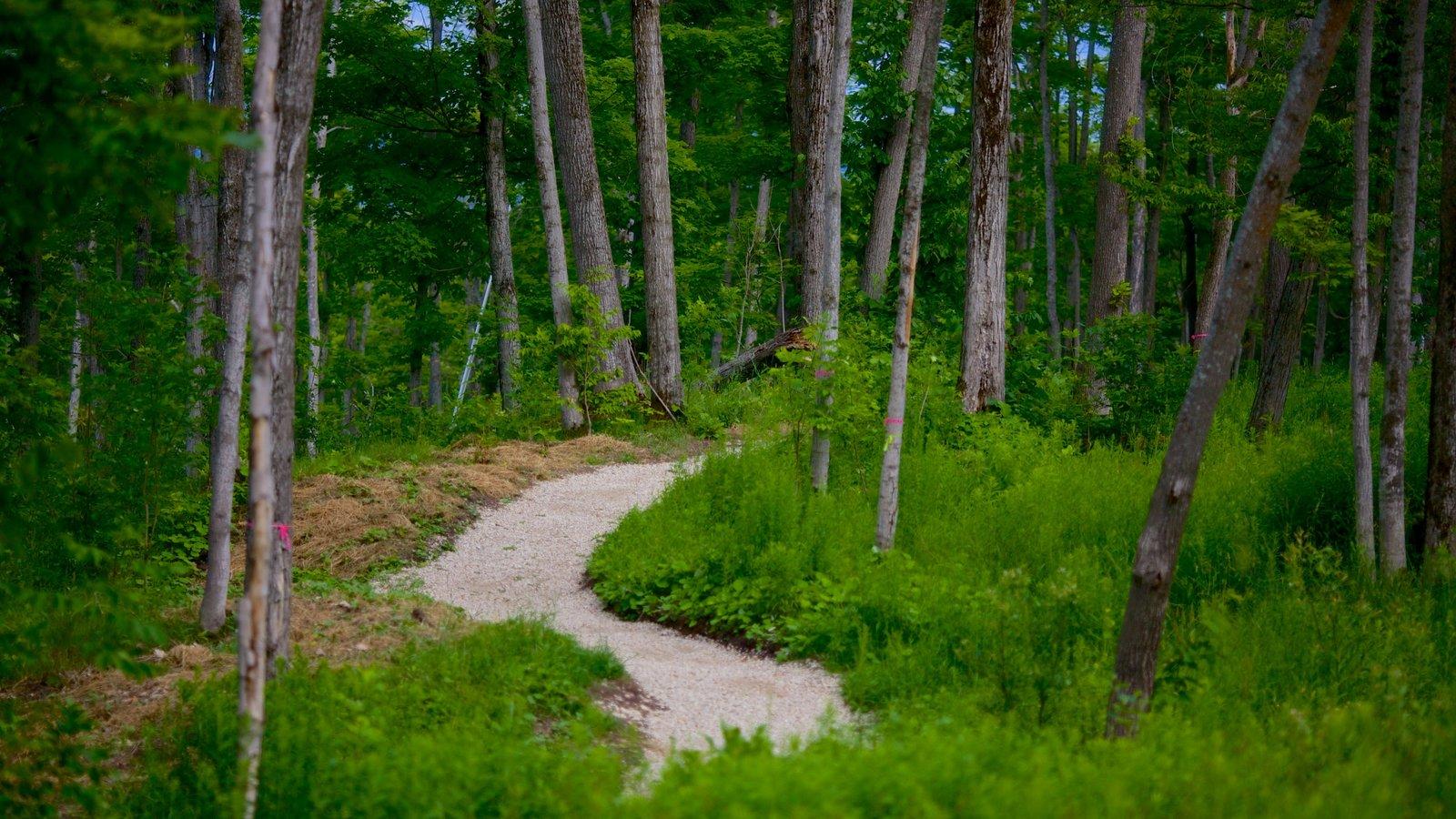 Blue Mountains que inclui florestas