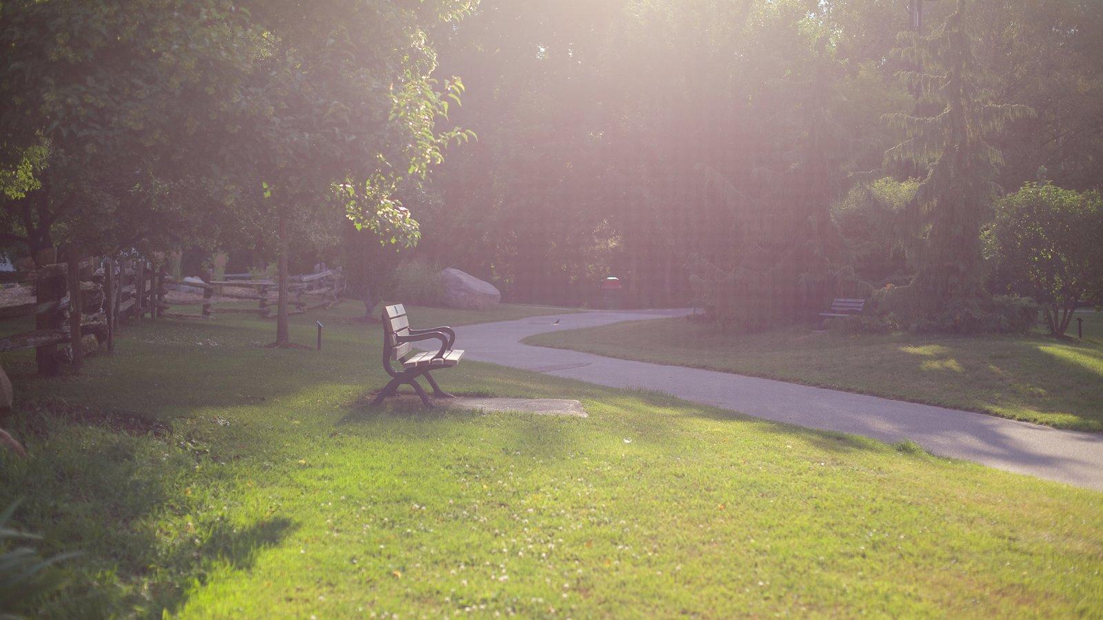 Collingwood que inclui um jardim