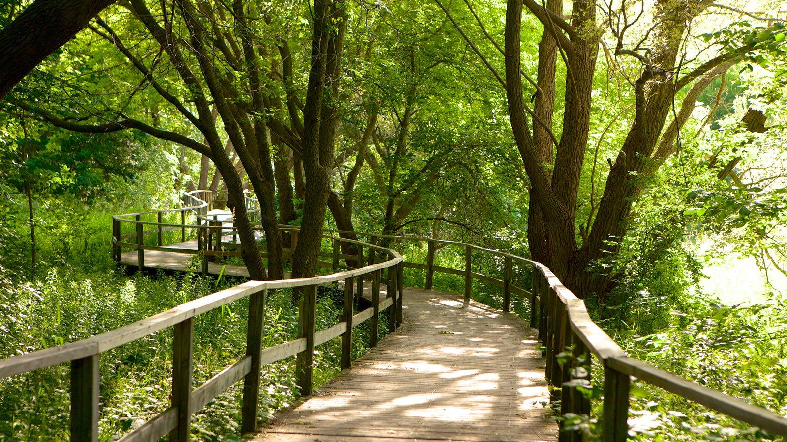 Collingwood que inclui uma ponte e florestas