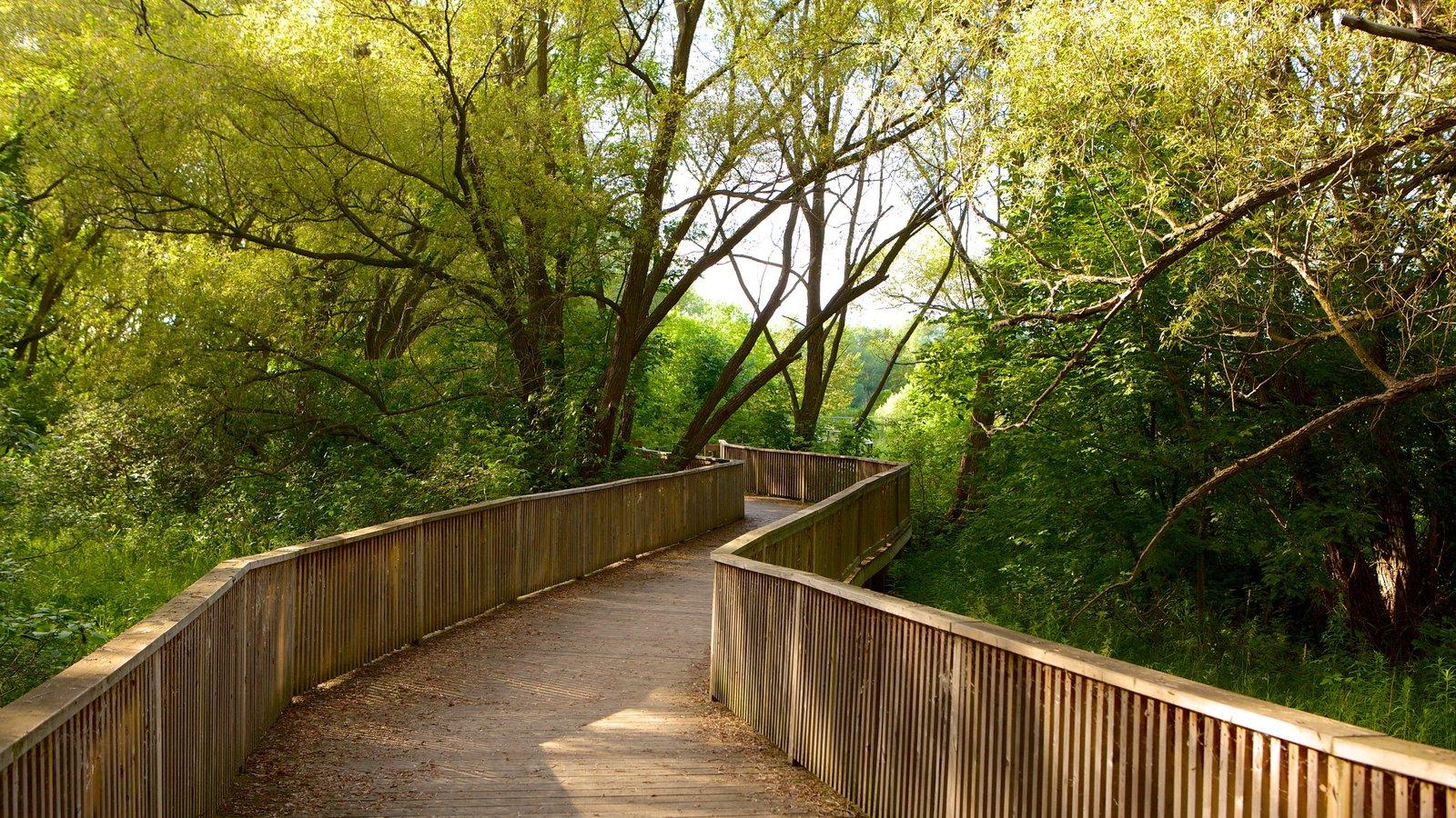 Collingwood mostrando florestas e uma ponte