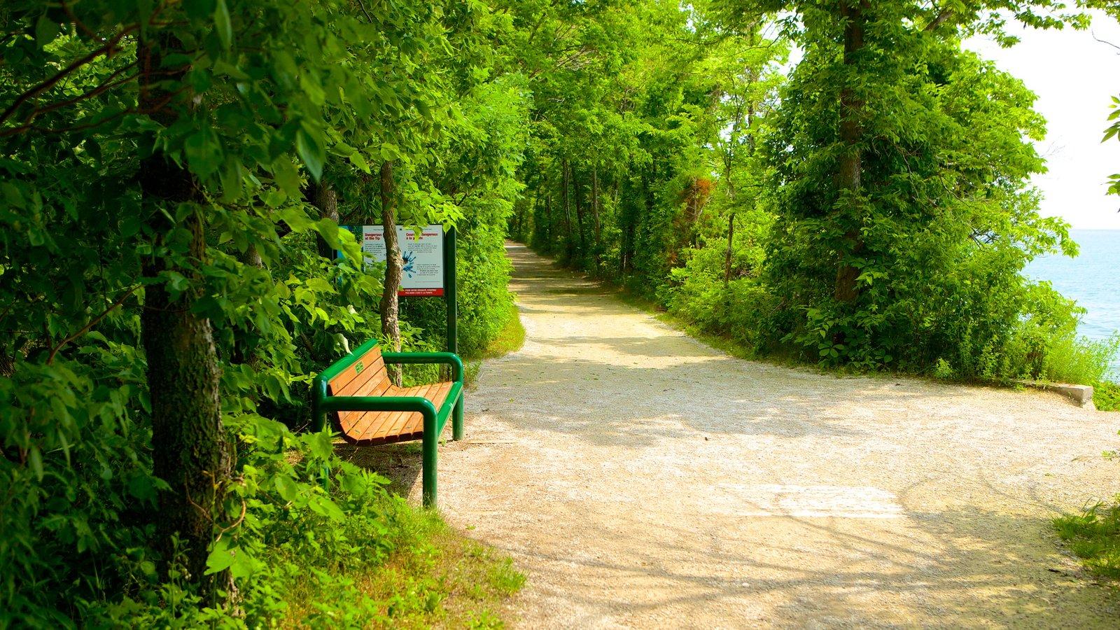 Point Pelee National Park caracterizando cenas de floresta e paisagens