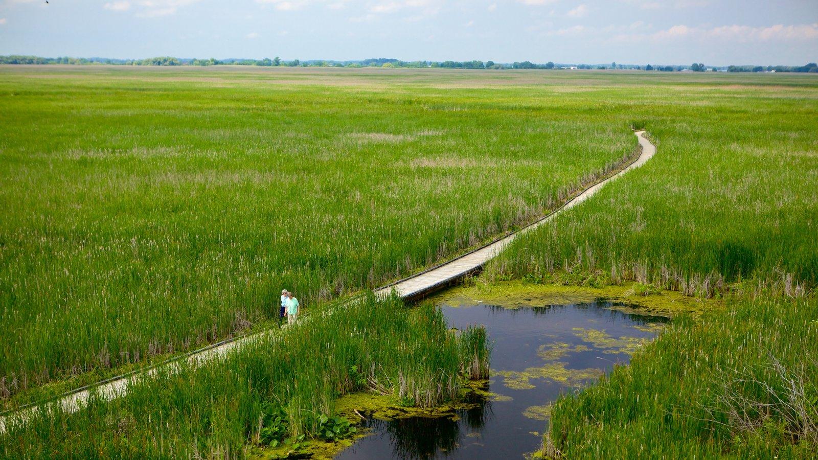 Point Pelee National Park mostrando cenas tranquilas, pântano e uma ponte