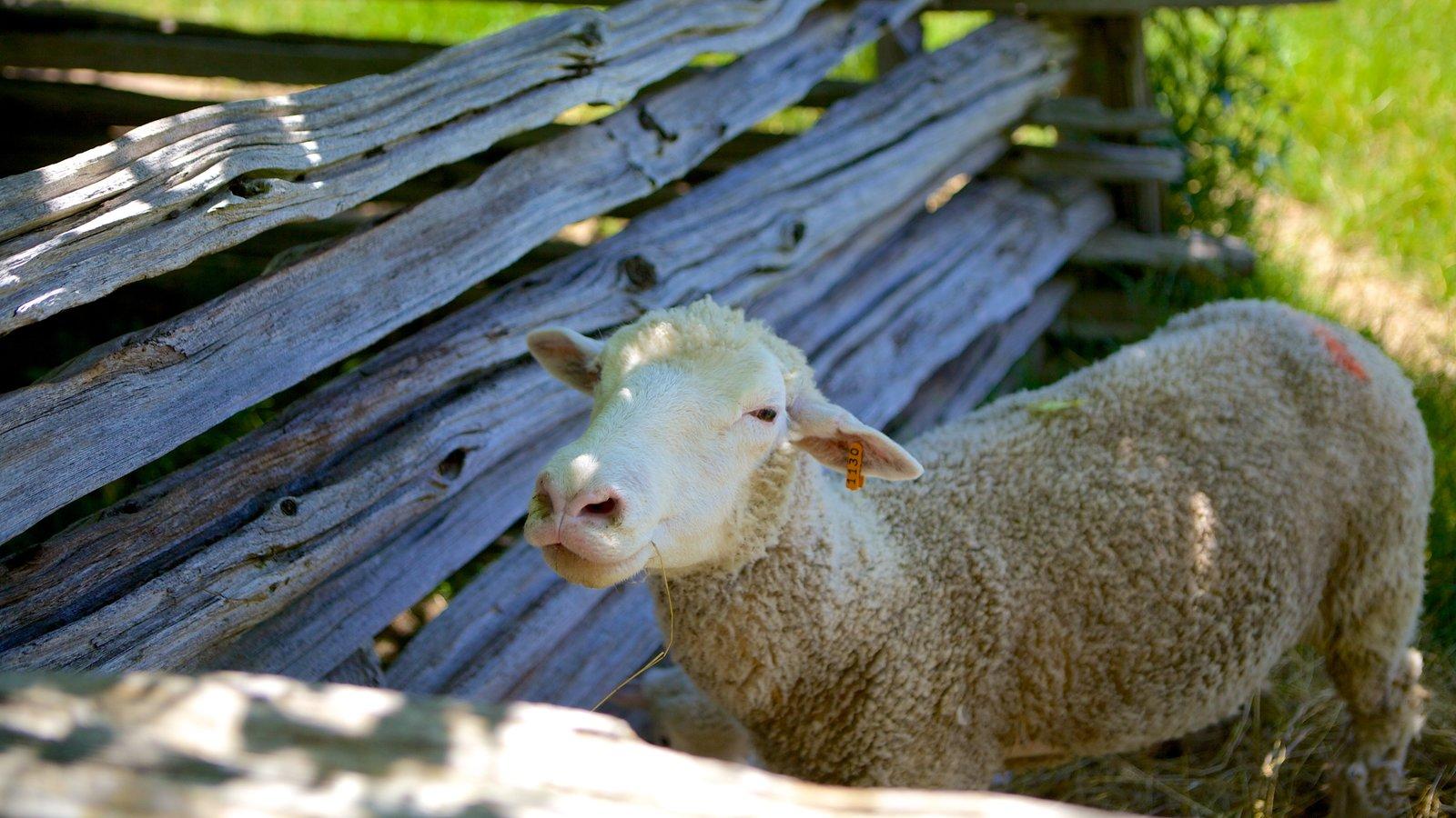 Fanshawe Pioneer Village showing farmland and cuddly or friendly animals