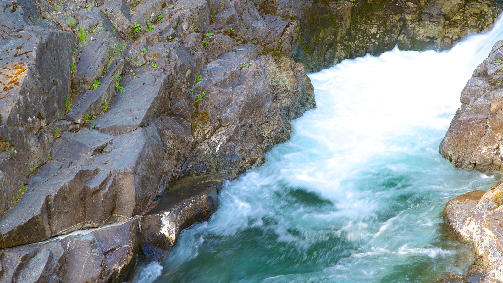 Little Qualicum Falls Provincial Park featuring rapids