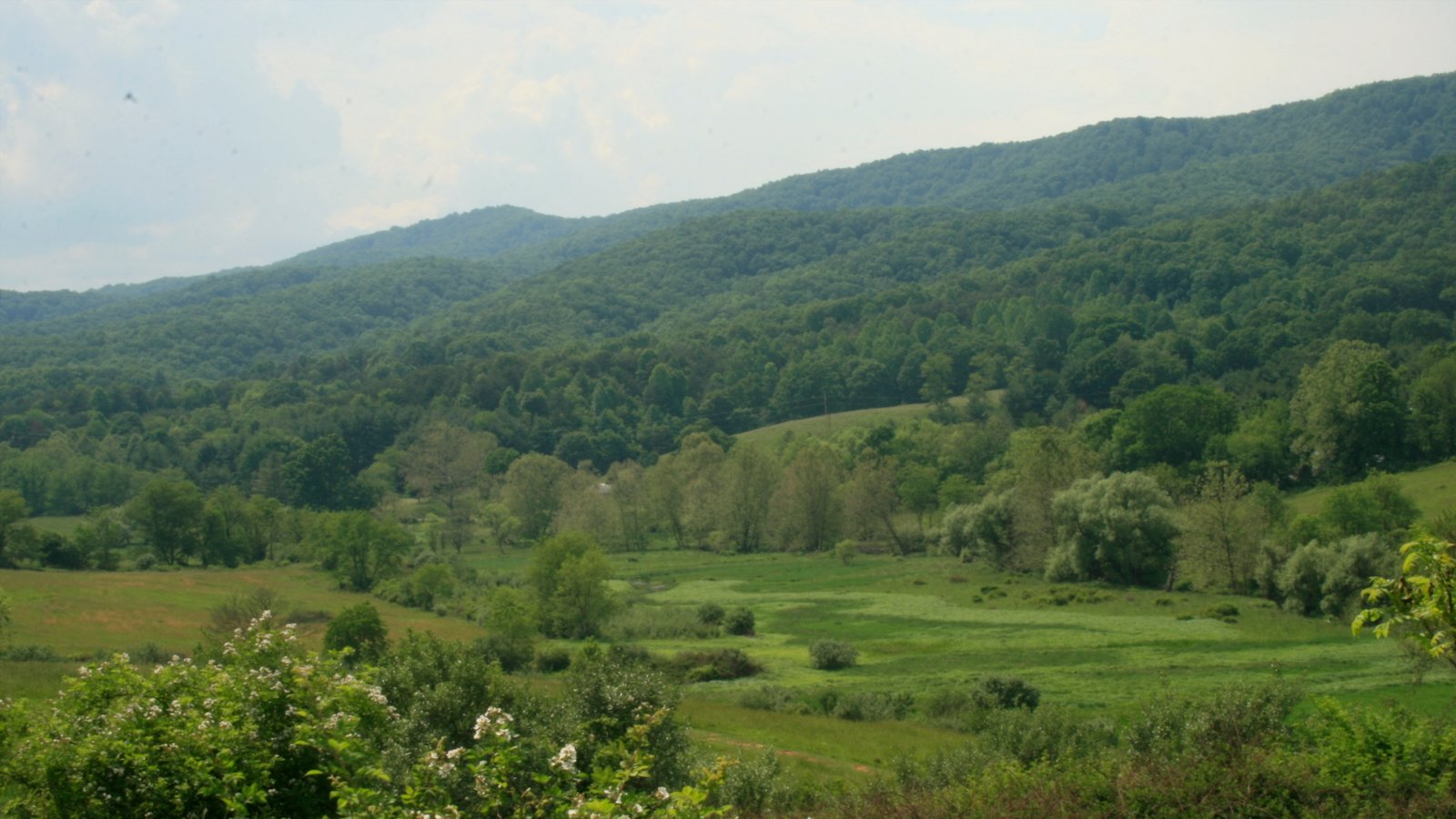Blacksburg which includes forest scenes and landscape views