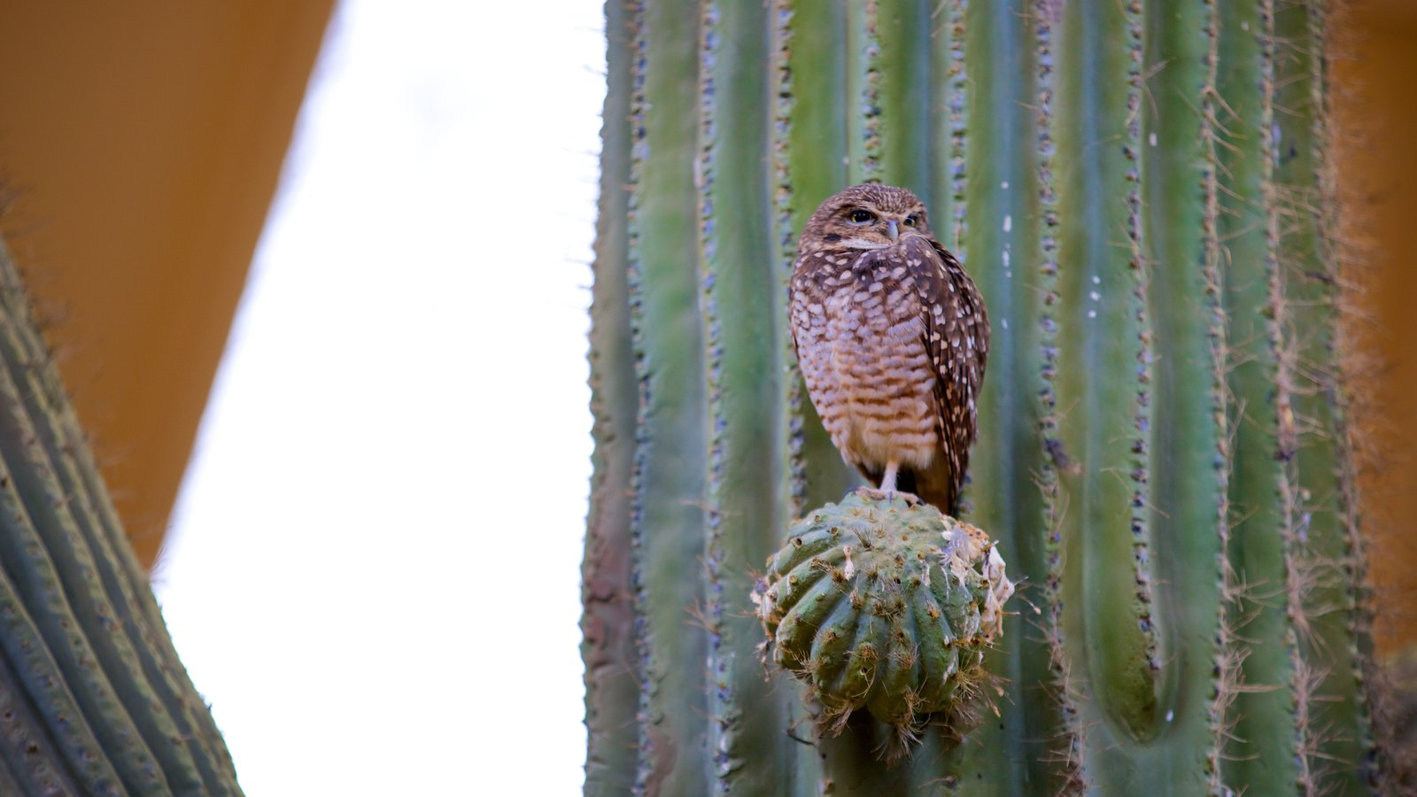 ZooAmerica que inclui vida das aves e animais de zoológico