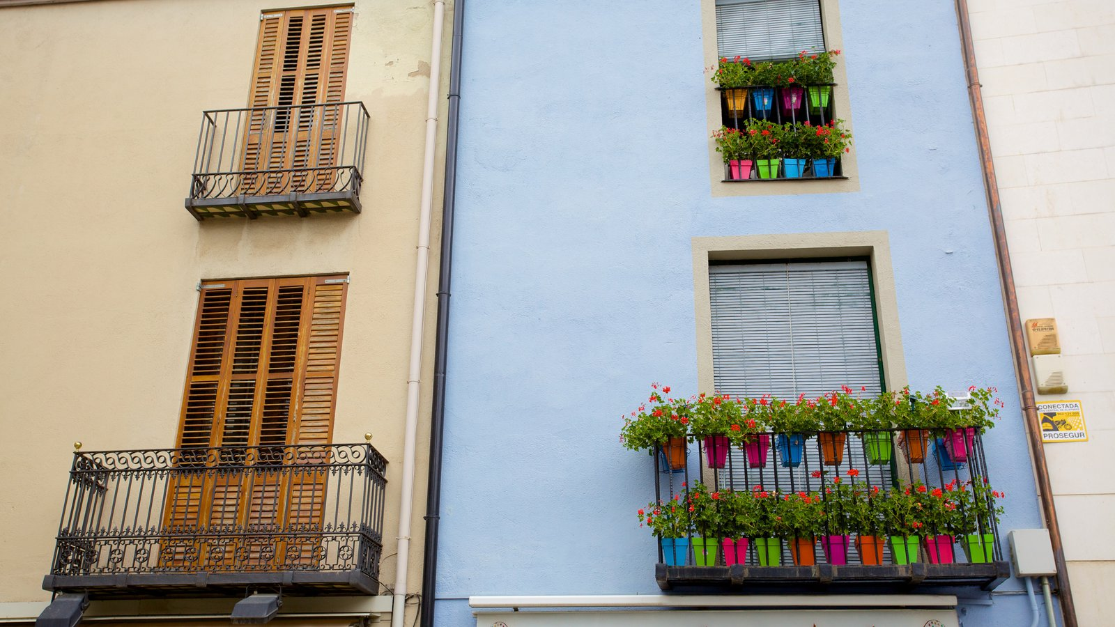 Granollers showing flowers, street scenes and a house