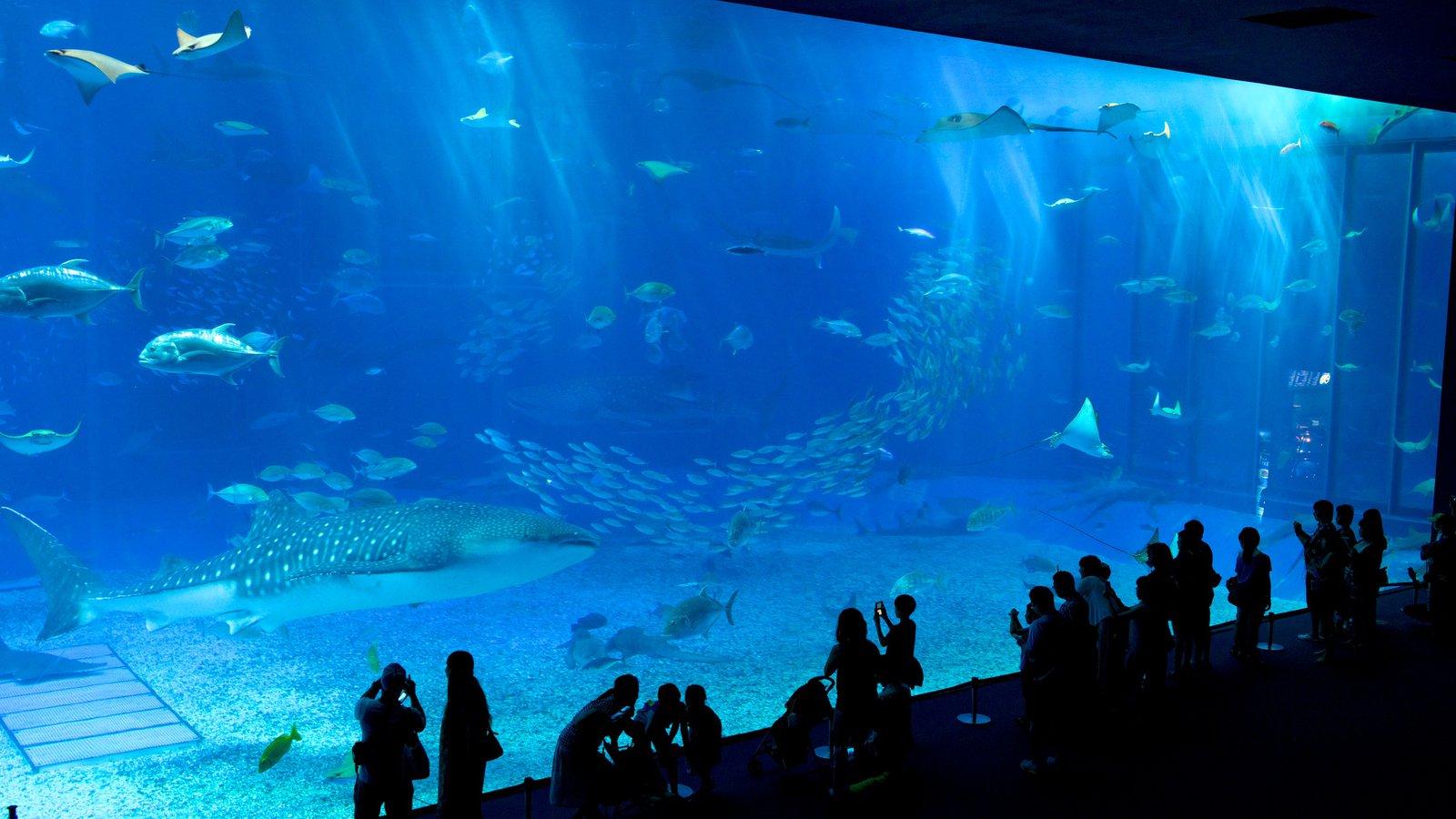 Okinawa Churaumi Aquarium showing marine life and interior views