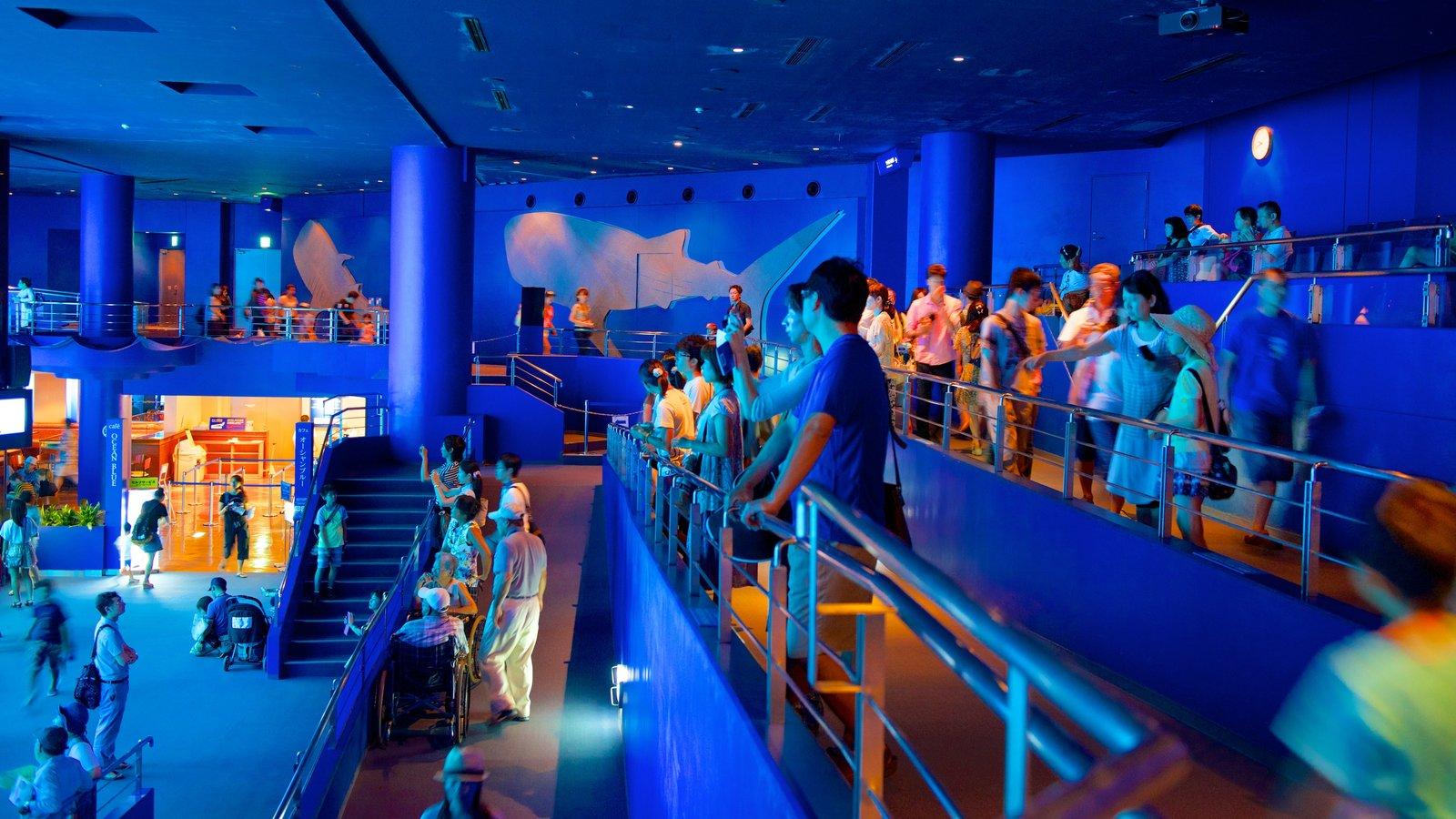Okinawa Churaumi Aquarium showing interior views and marine life as well as a large group of people