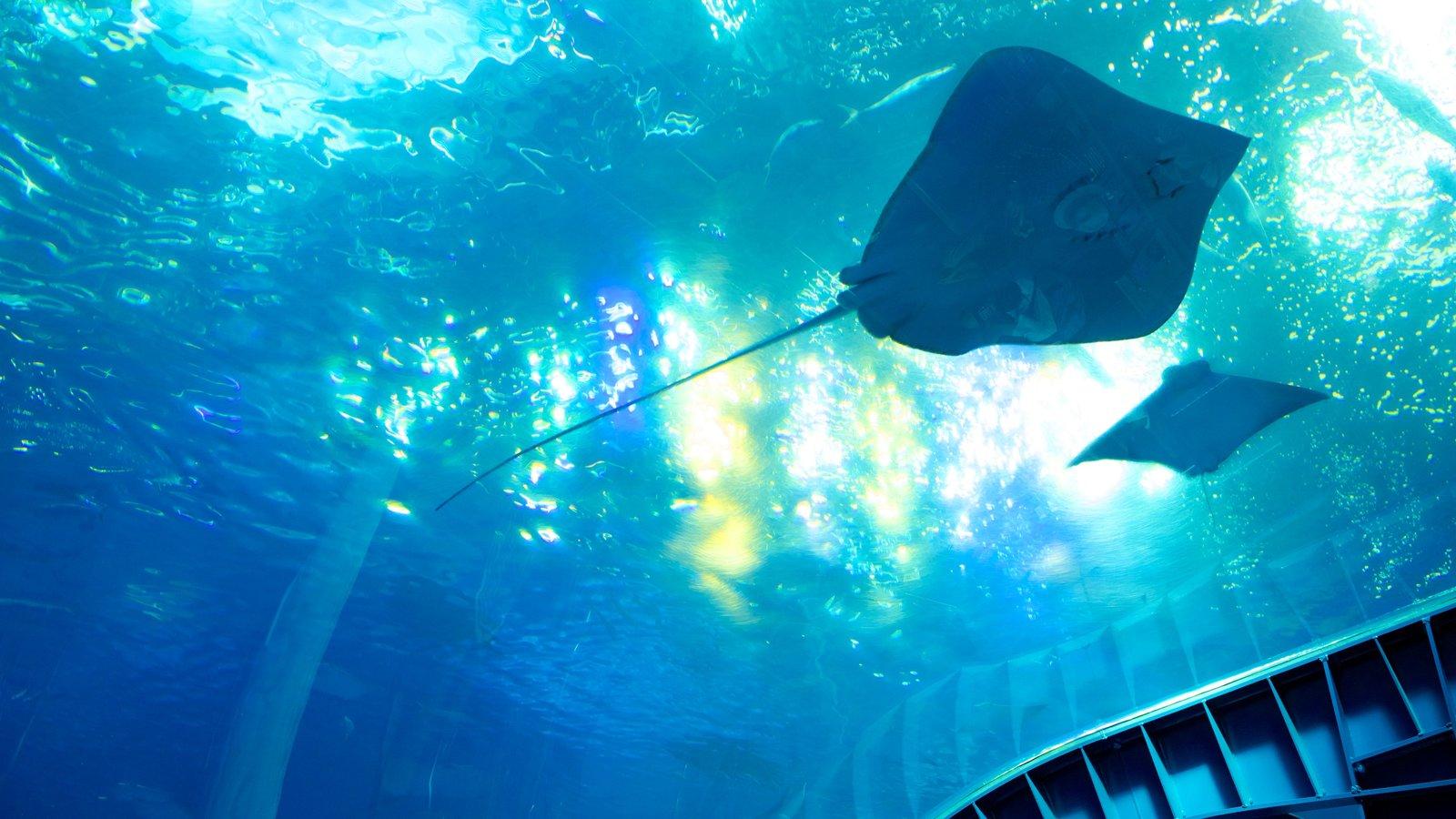 Okinawa Churaumi Aquarium which includes marine life