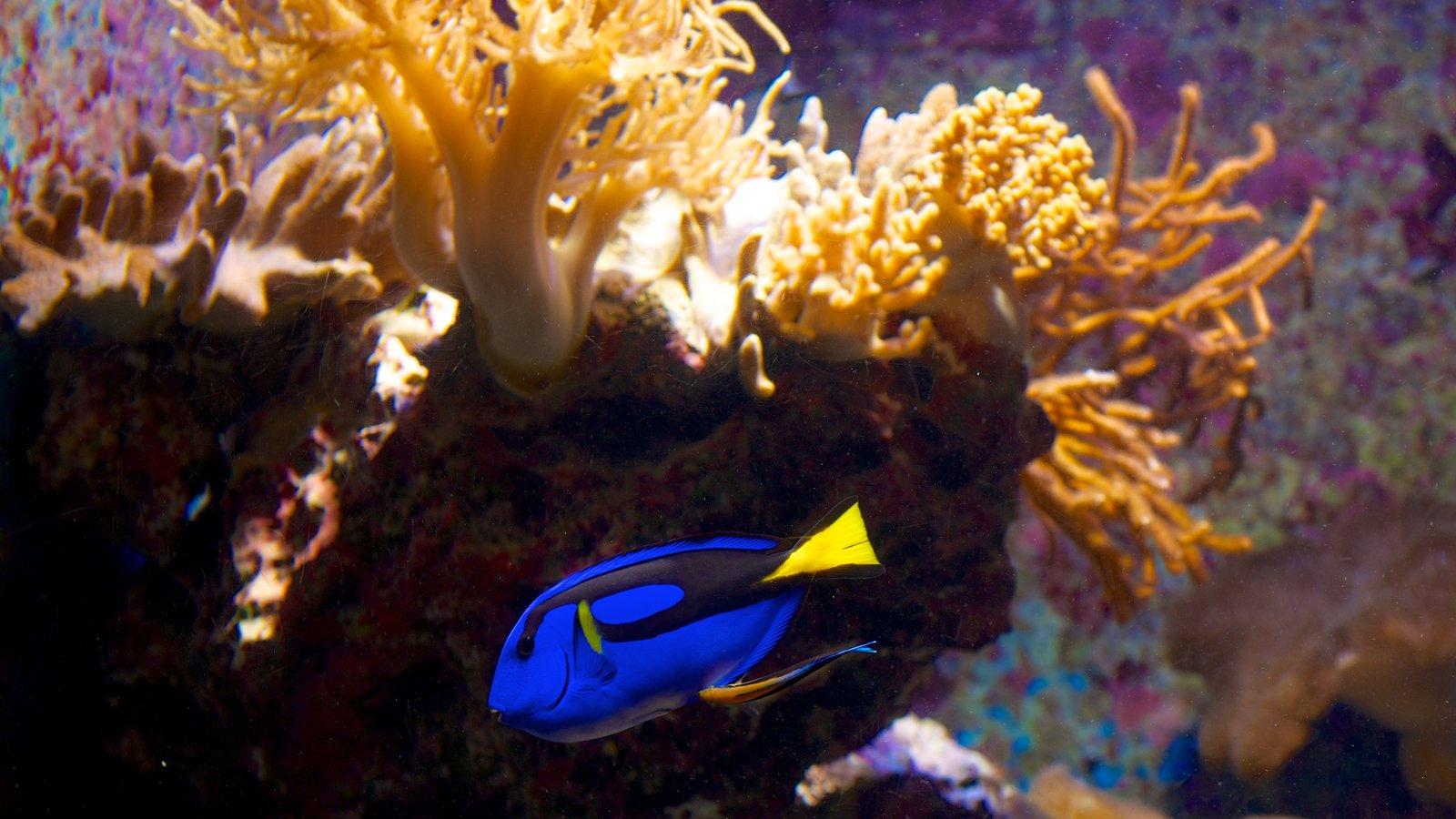 Okinawa Churaumi Aquarium featuring coral and marine life