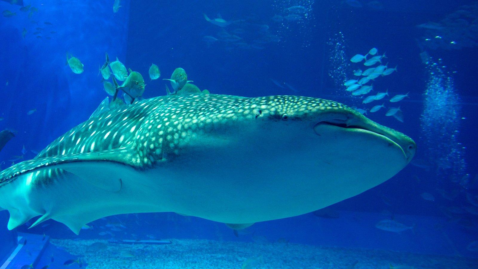 Okinawa Churaumi Aquarium showing marine life