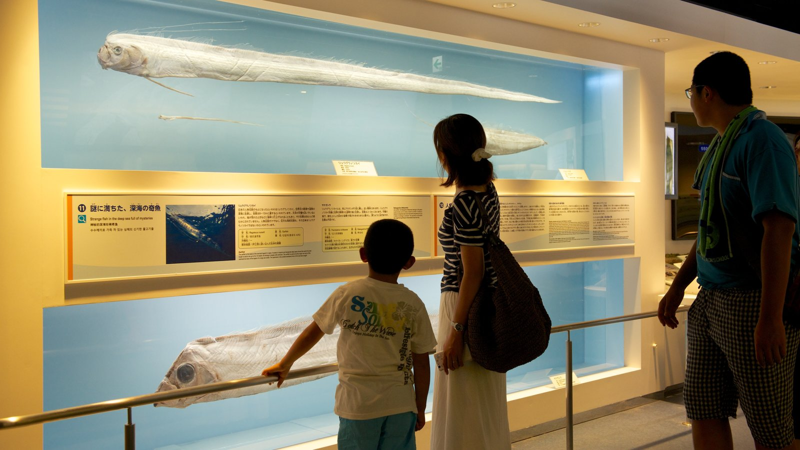Okinawa Churaumi Aquarium showing interior views and marine life as well as a family