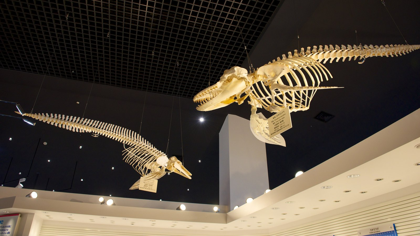 Okinawa Churaumi Aquarium featuring marine life and interior views