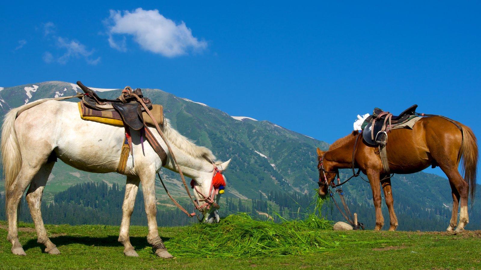Gulmarg which includes land animals
