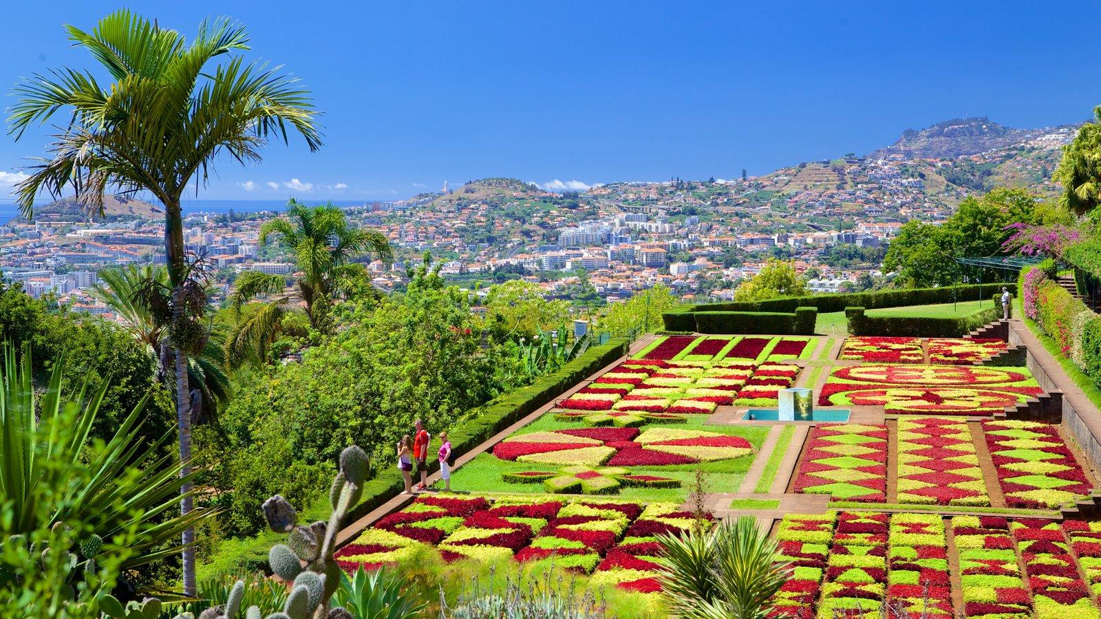 Live Webcam Streaming of Funchal City São Roque Madeira