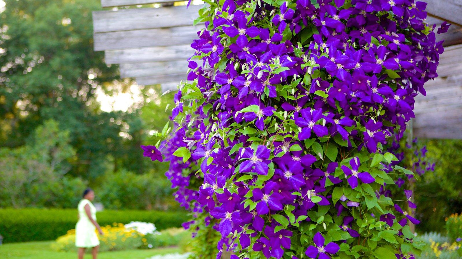 Elizabeth Park que incluye flores, un jardín y flores silvestres