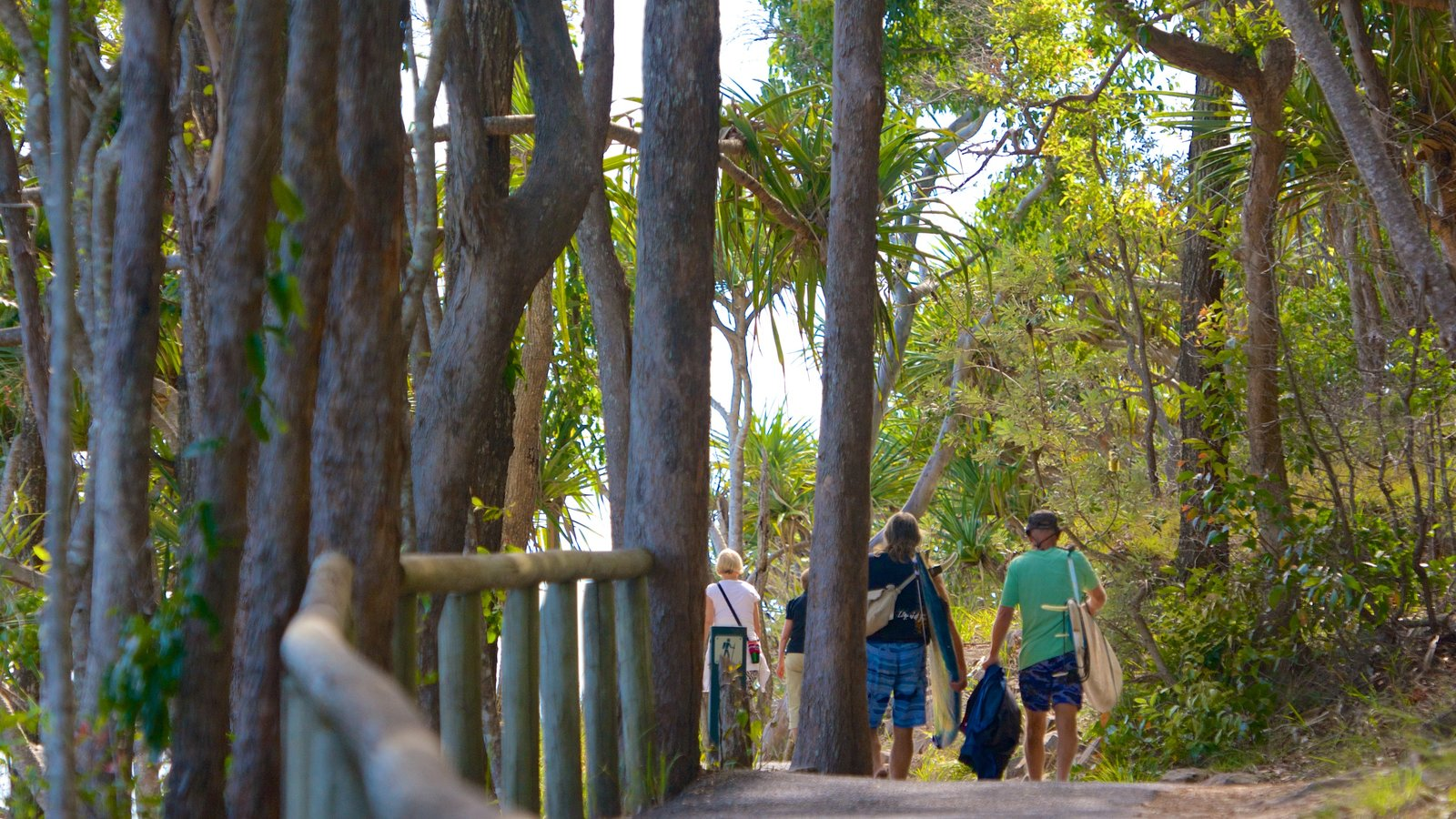 Noosa National Park featuring forests and hiking or walking as well as a small group of people