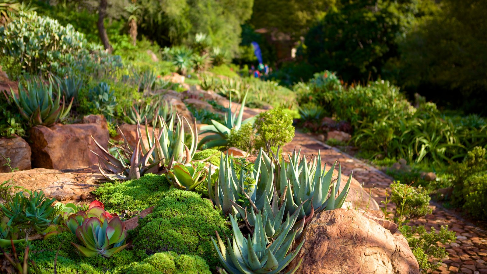 Perfect Walter Sisulu Botanical Gardens Which Includes Flowers And A Park
