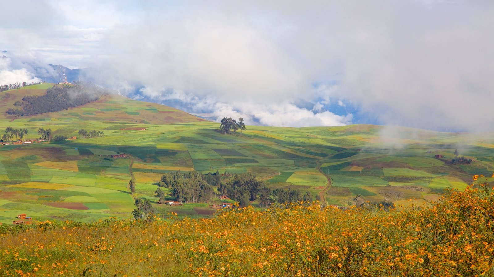 Cusco showing tranquil scenes, wildflowers and landscape views