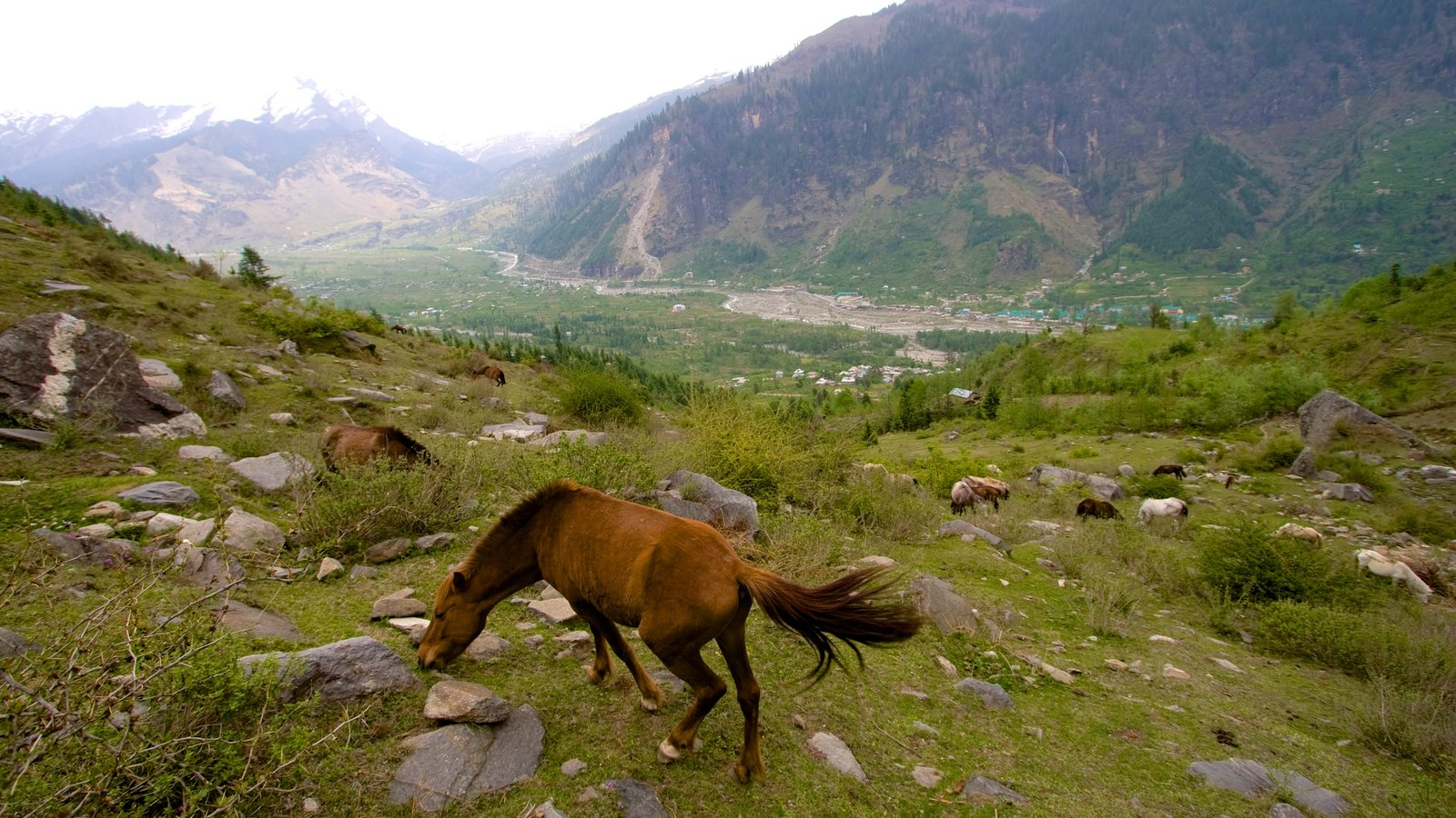 Manali showing land animals, mountains and tranquil scenes