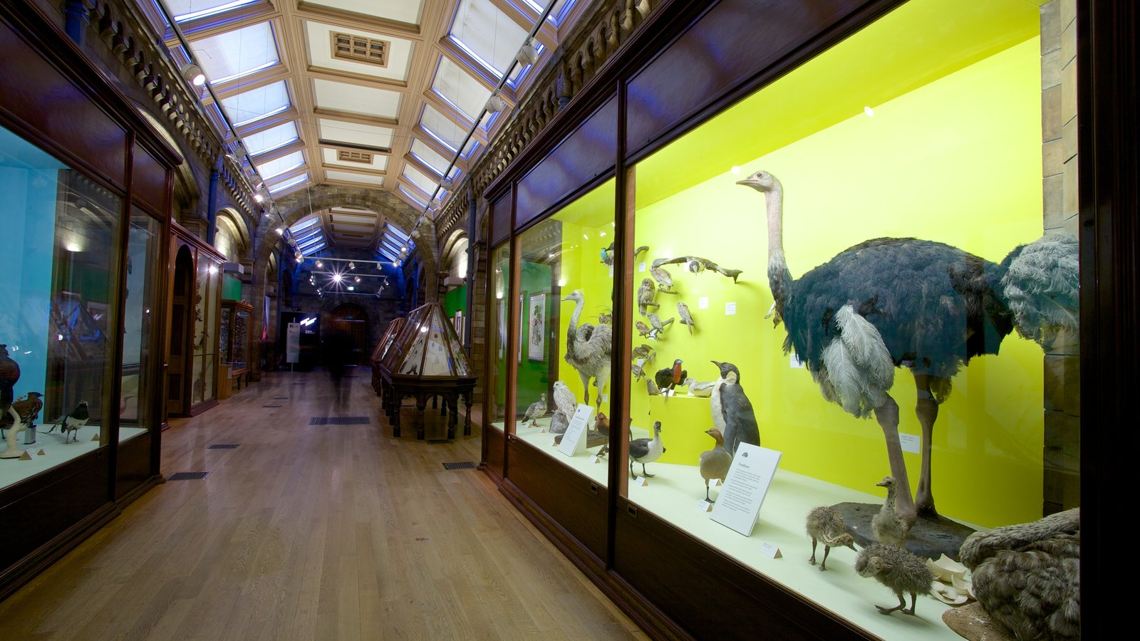 London Natural History Museum which includes heritage architecture, heritage elements and interior views