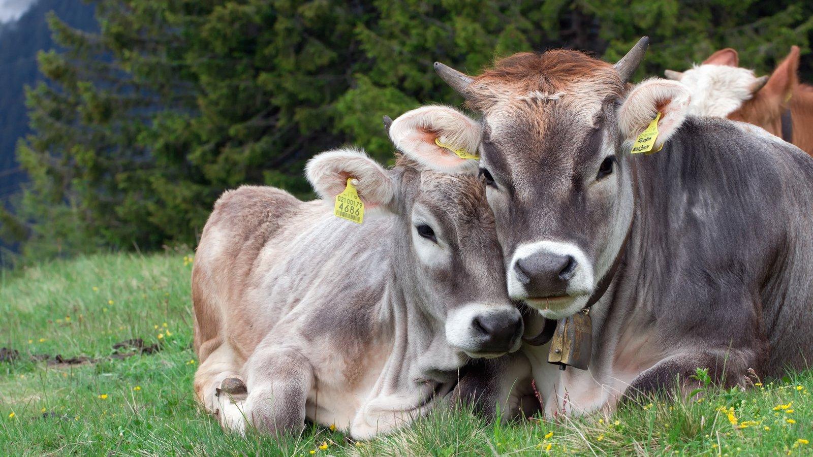 Merano featuring land animals