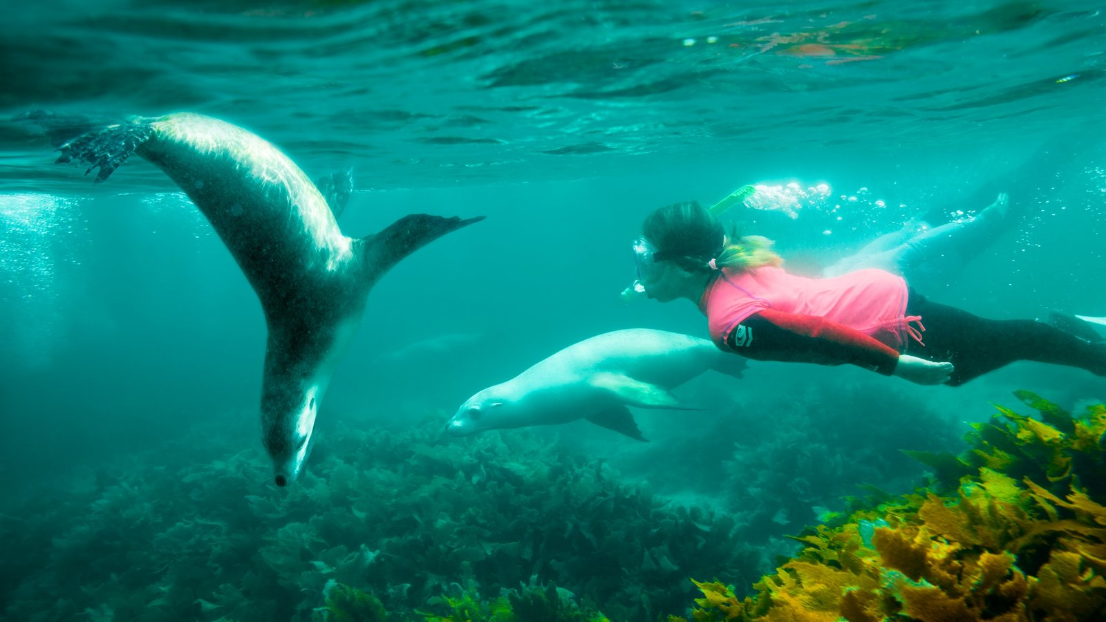 Eyre Peninsula showing snorkeling and marine life as well as an individual femail
