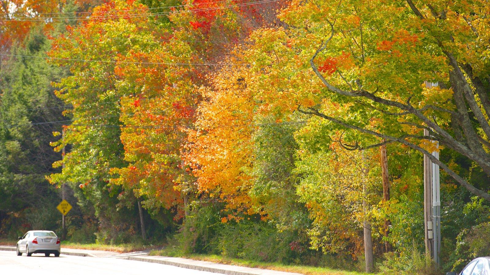 Freeport que inclui cores do outono