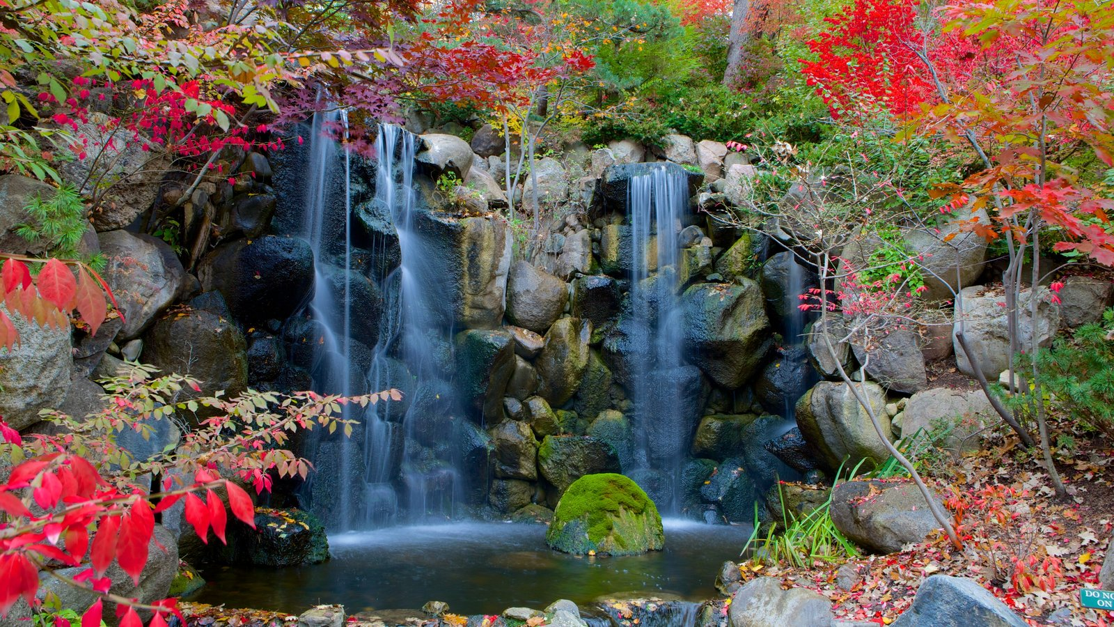 Anderson Japanese Gardens showing autumn leaves and a cascade
