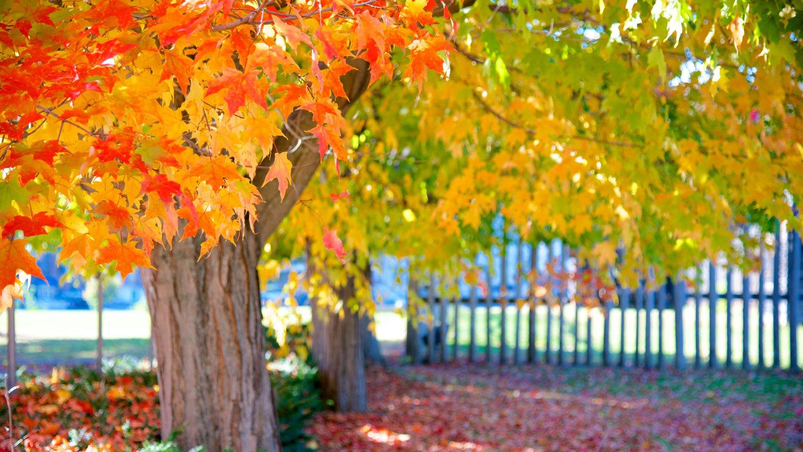 Augusta que inclui folhas de outono