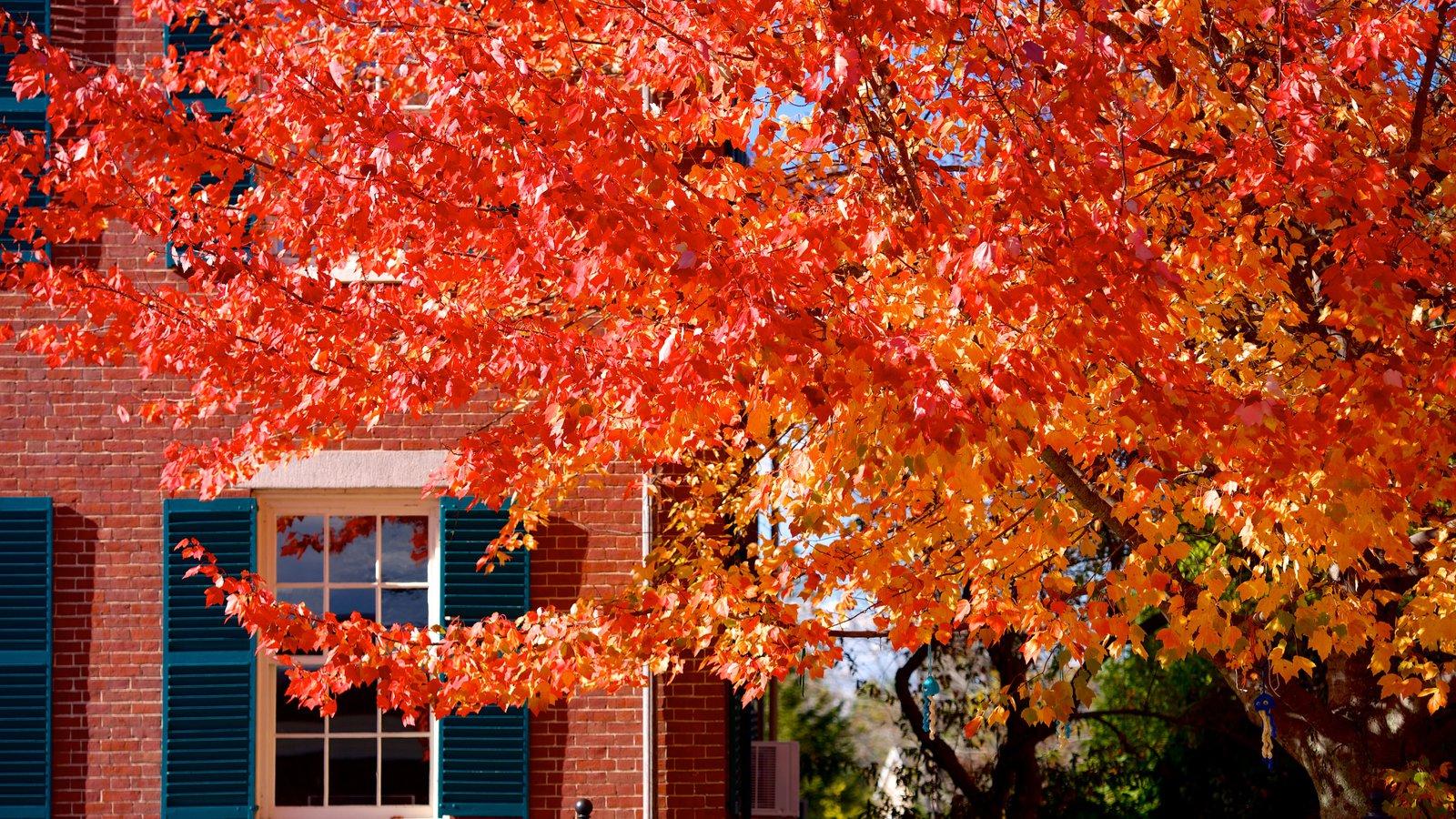 Freeport caracterizando cores do outono