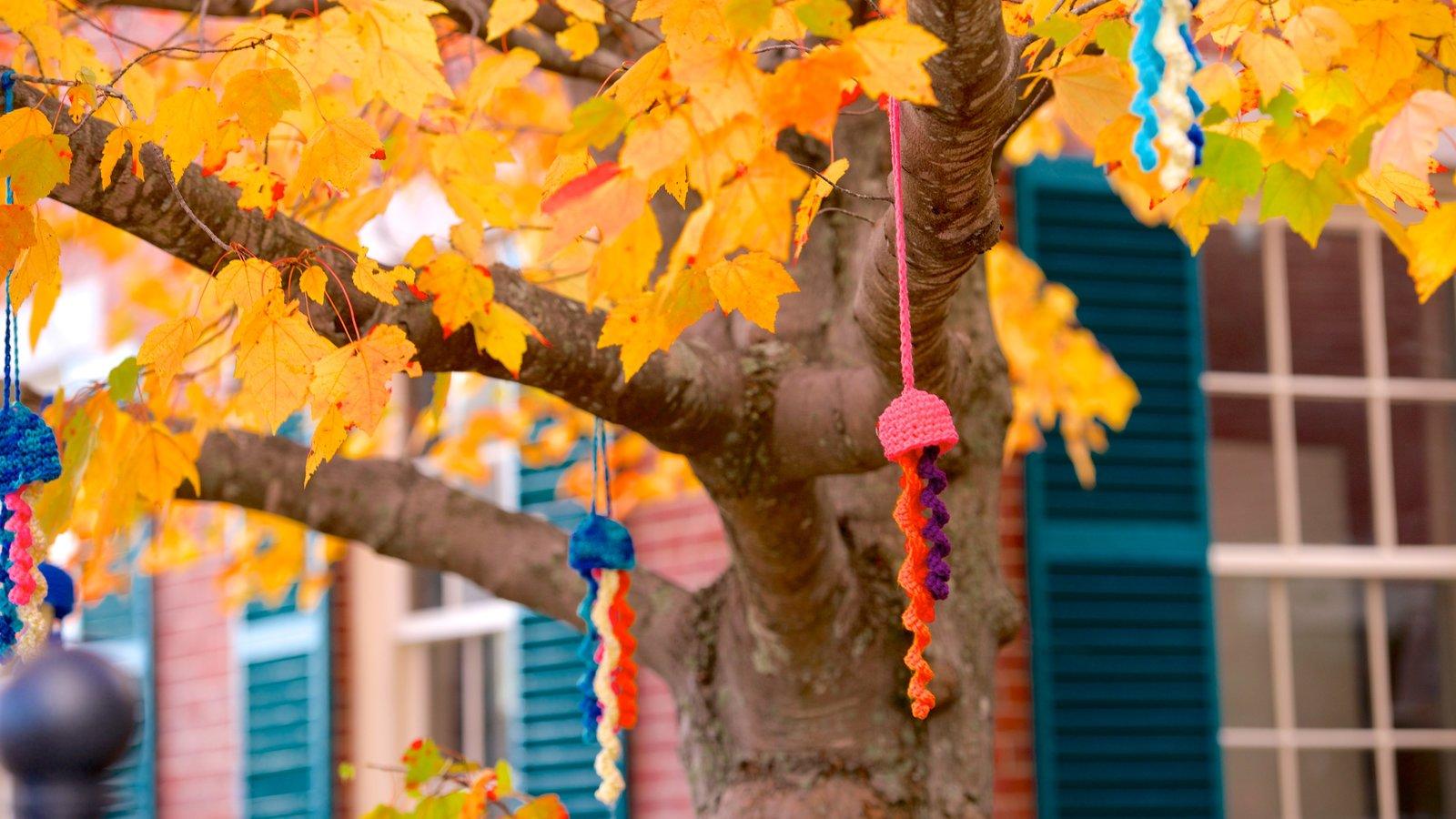 Freeport caracterizando folhas de outono