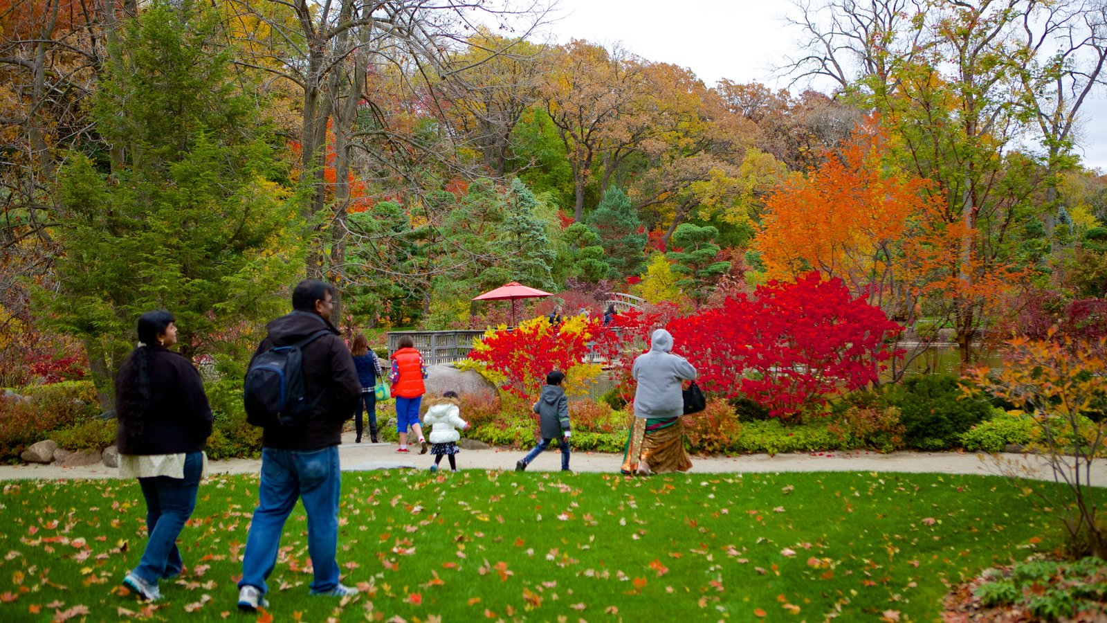 Anderson Japanese Gardens which includes fall colors and a park as well as a small group of people