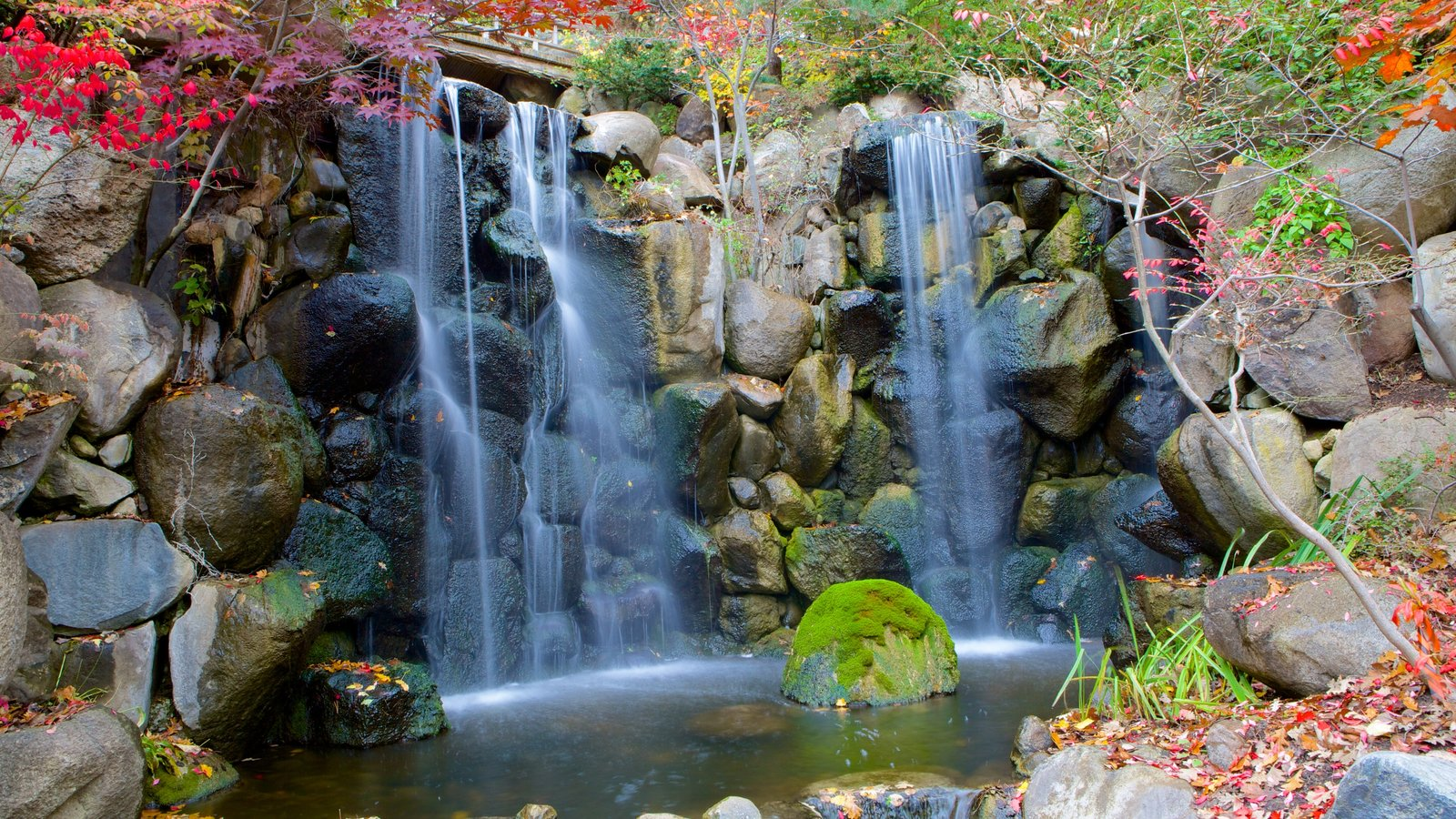 Anderson Japanese Gardens showing a waterfall and a garden