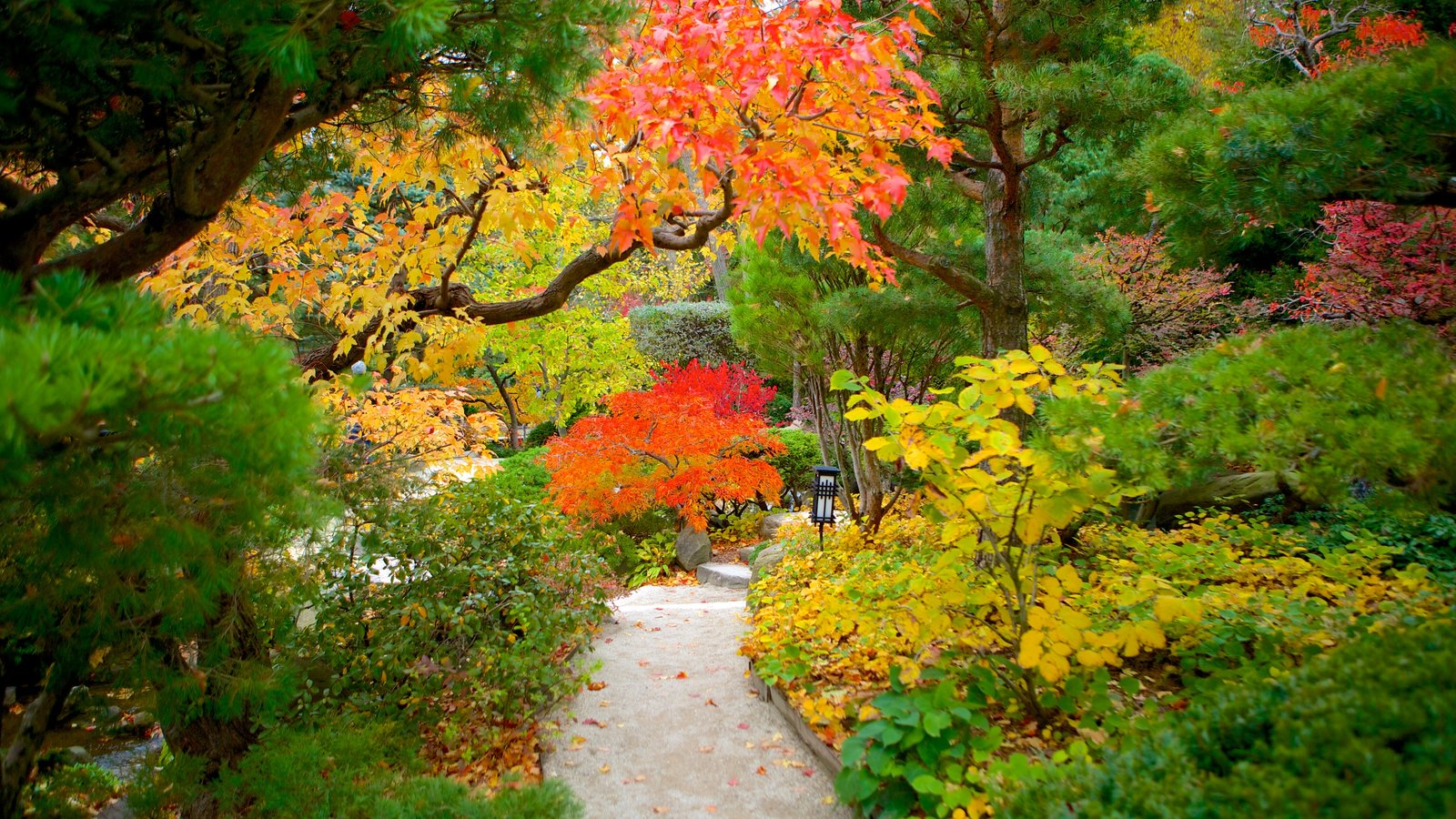 Anderson Japanese Gardens featuring fall colors and a garden