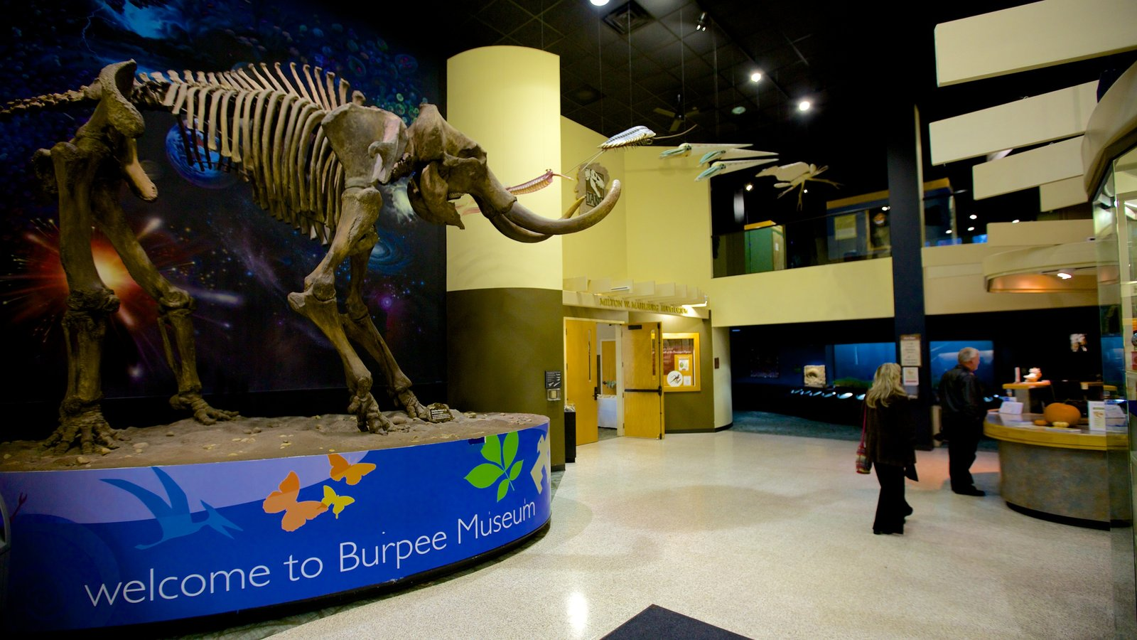Burpee Museum of Natural History featuring interior views