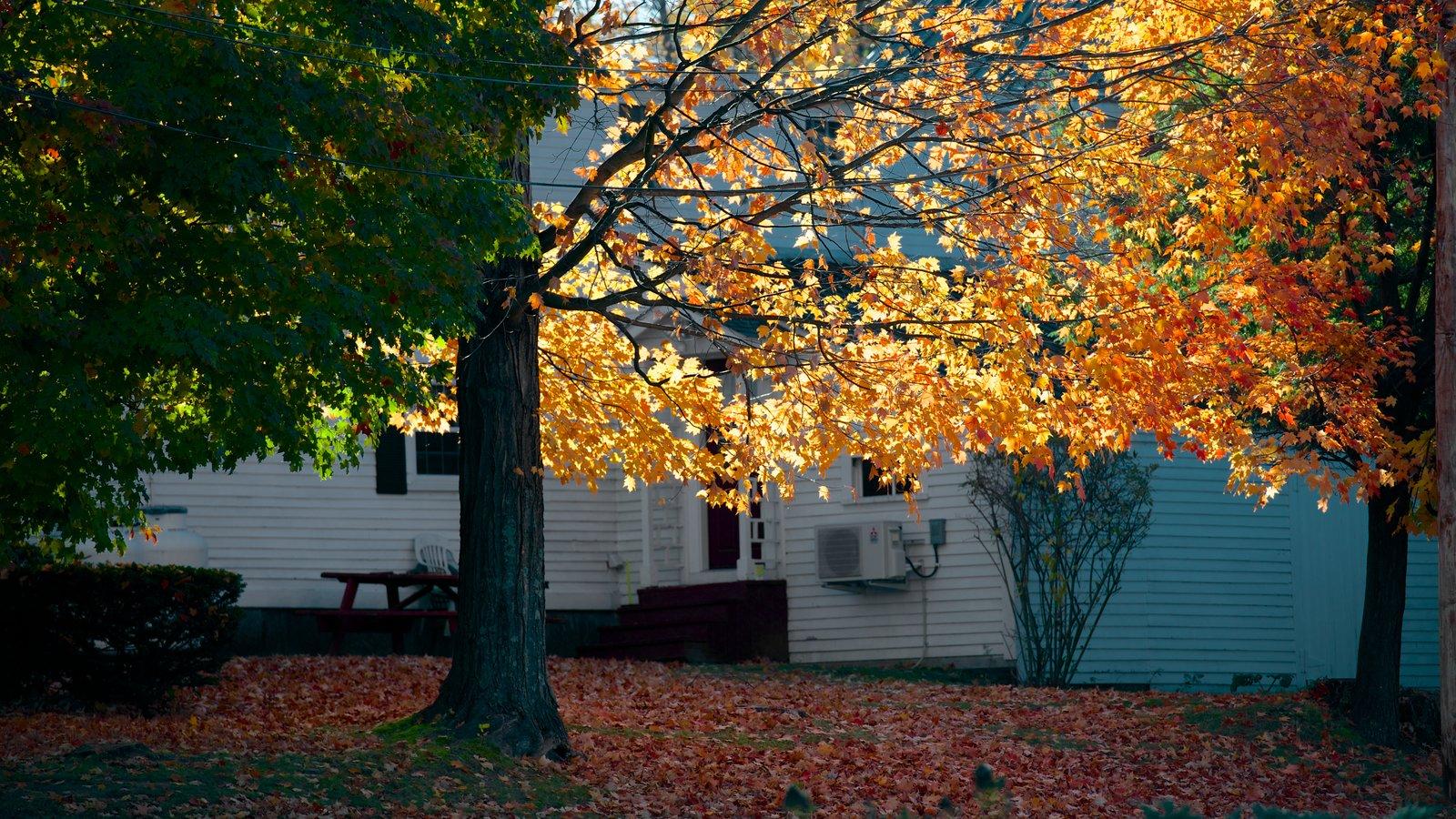 Conway ofreciendo los colores del otoño