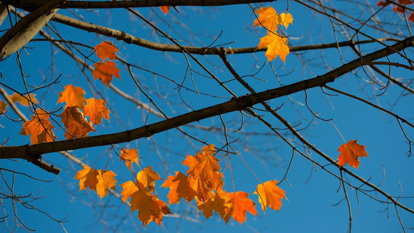 Conway que incluye hojas de otoño