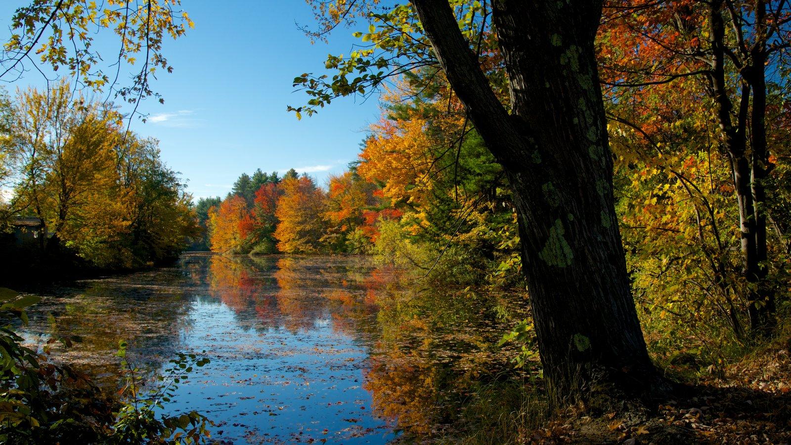 Conway mostrando cores do outono, um parque e um rio ou córrego