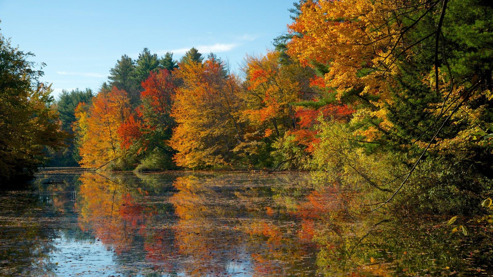 Conway mostrando un lago o abrevadero y hojas de otoño